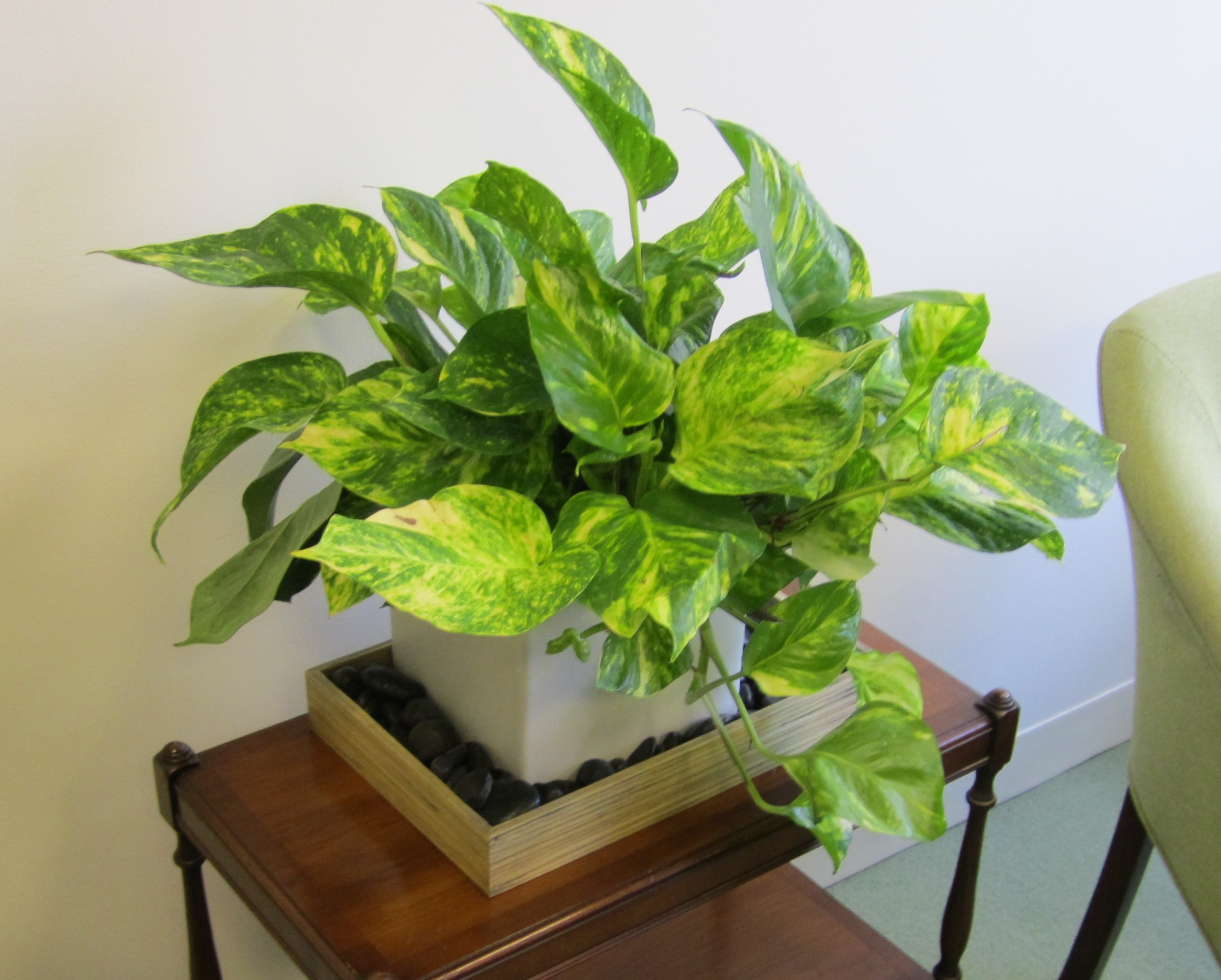 best and easy to plant houseplants that improve indoor air quality, Natural flower