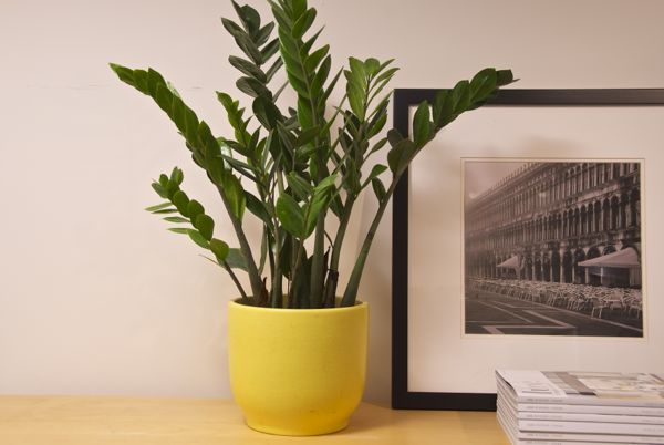 houstoninteriorplants